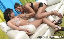 Hot Shemales Get Comfortable